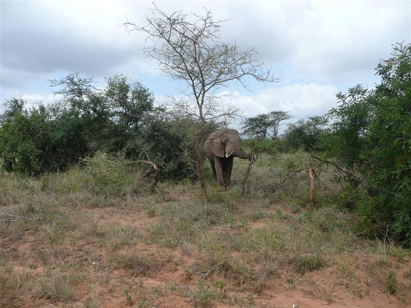 0902 JT Elephant
