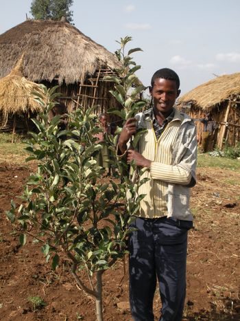Ebebe, a farmer participating in the apple growing project