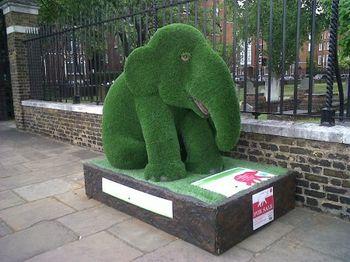 Elephant-253[1]