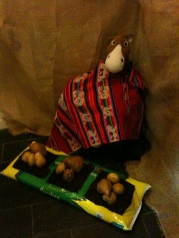 10 07 26 potato loo