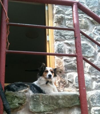 Guard doggie