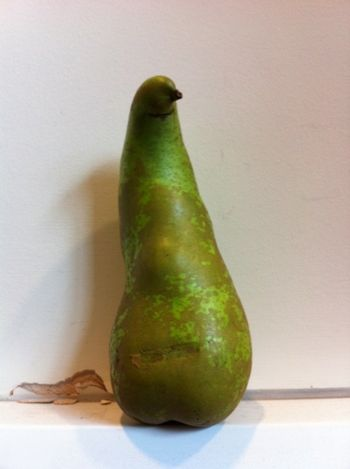 Pigeon Pear