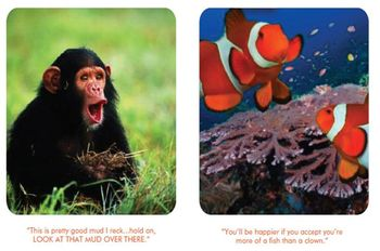 Chimp & clownfish