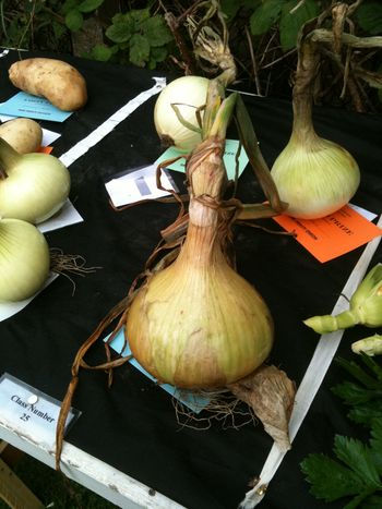The winning giant onion
