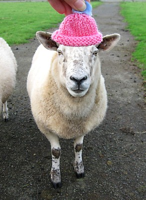 3 Claire Watson's pink sheep