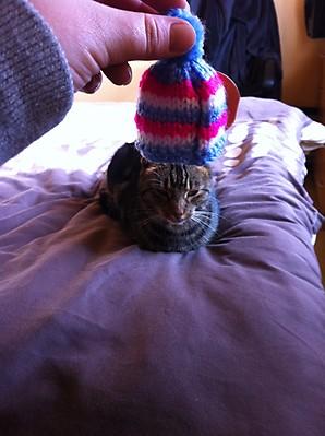 2 Leanne Lunn's Cat