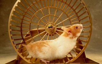 Hamster-to-generate-energy-for-mobilephone-450x281