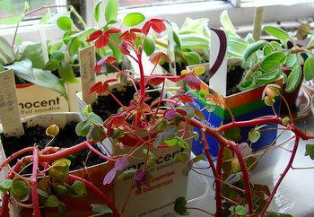 Plants1_2