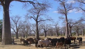 Malawi_blog_2