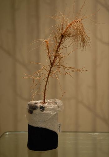 Preservedtree