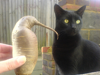 Beetroot_penguin_and_jedi_the_cat