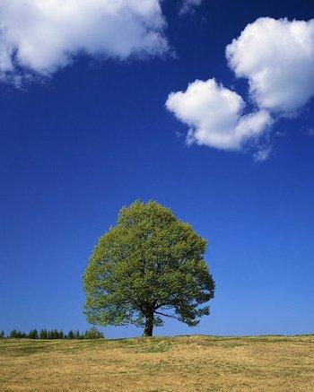 Treetastic_2